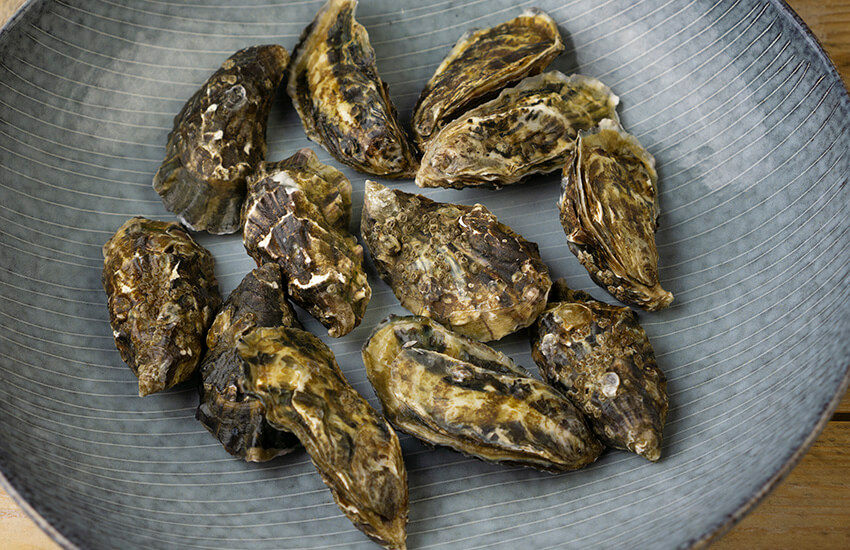 Oesters dicht